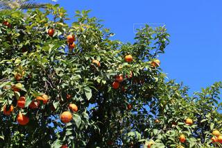 オレンジの写真・画像素材[632118]