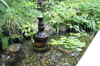 庭に座っている花の花瓶の写真・画像素材[1564880]