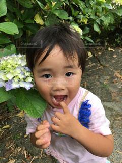 花の写真・画像素材[635670]