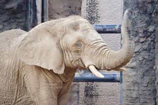 建物の前に赤ちゃん象立っての写真・画像素材[771975]