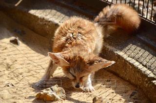 地面に横になっている猫の写真・画像素材[776031]