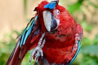 カラフルな鳥が枝に腰掛けの写真・画像素材[779737]