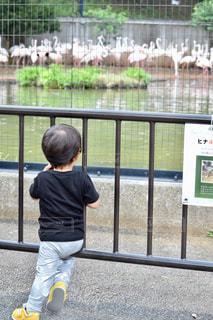 フェンスの横に立っている小さな男の子の写真・画像素材[781360]