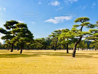 フィールドの真ん中の木の写真・画像素材[923849]