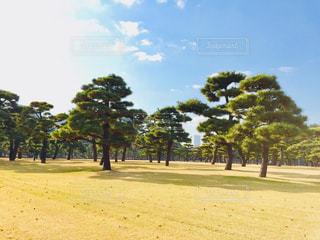 公園の木の写真・画像素材[923850]
