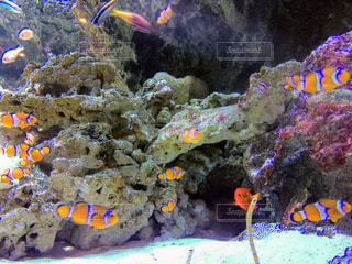 水の中の魚の群れの写真・画像素材[1027821]