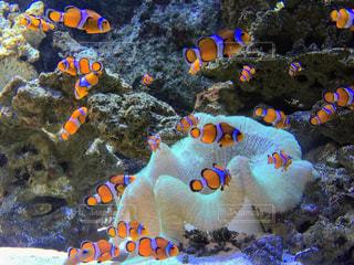 水の中の魚の群れの写真・画像素材[1027822]