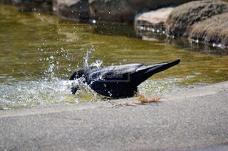 水中を泳ぐ動物の写真・画像素材[1068787]