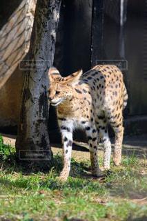 草の中に立っている猫の写真・画像素材[1075624]