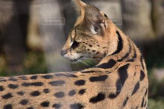 近くに猫のアップの写真・画像素材[1075626]