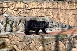 動物園のエンクロージャのツキノワグマの写真・画像素材[1078630]