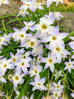 近くの花のアップの写真・画像素材[1087358]