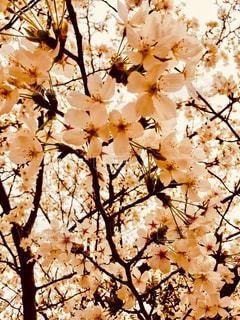 木の枝に花の花瓶の写真・画像素材[1087367]