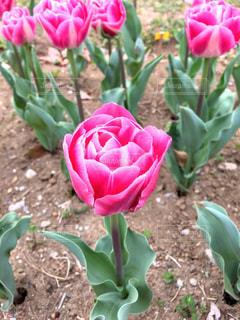 植物にピンクの花の写真・画像素材[1111241]
