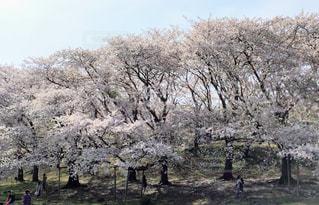 木の隣に立っている人のグループの写真・画像素材[1111333]