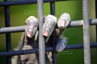 ワイヤー フェンスの上に座って鳥の写真・画像素材[1139178]