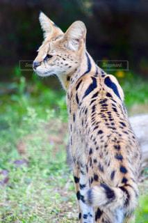 草の中に立っている猫の写真・画像素材[1148543]
