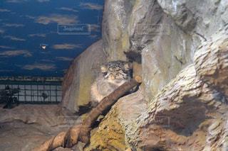 近くに大きな岩のアップの写真・画像素材[1353309]