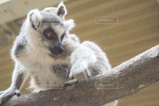 灰色の小動物の写真・画像素材[1490408]