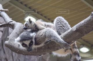 近くに動物のアップの写真・画像素材[1490409]