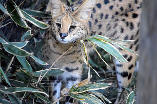 枝の上に座って猫の写真・画像素材[1710624]