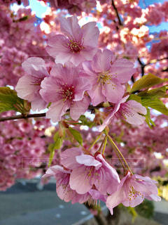 近くの花のアップの写真・画像素材[1831926]