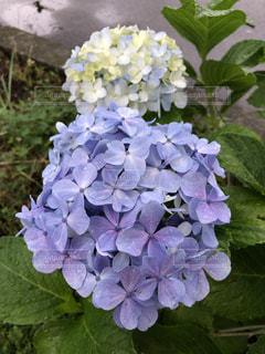 花園のクローズアップの写真・画像素材[2280756]