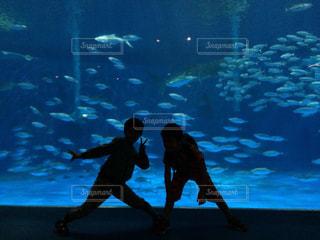 魚の写真・画像素材[633937]
