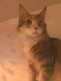 猫の写真・画像素材[631584]