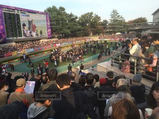 東京競馬場の写真・画像素材[631648]