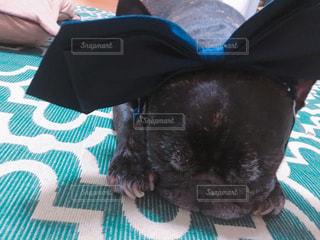 犬の写真・画像素材[632326]