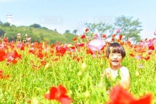 花畑の写真・画像素材[18162]
