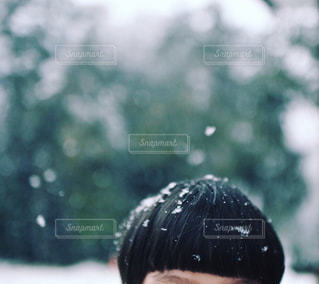 雪 - No.319384