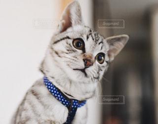 子猫の写真・画像素材[319386]