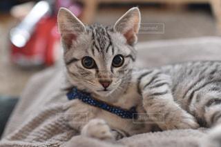 猫の写真・画像素材[320368]