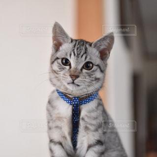 猫の写真・画像素材[320369]