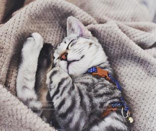 子猫の写真・画像素材[320370]