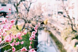 風景 - No.321197