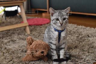 猫の写真・画像素材[321494]