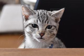 猫の写真・画像素材[328644]