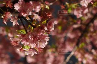 春 - No.329161