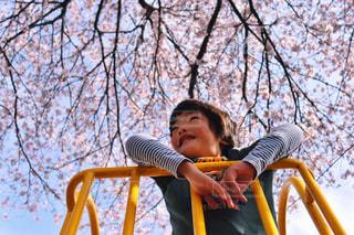 桜と男の子の写真・画像素材[983189]