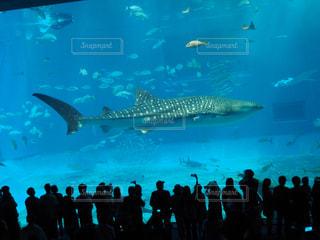 沖縄美ら海水族館と背景に人の大観衆の前で魚の群れの写真・画像素材[1179448]