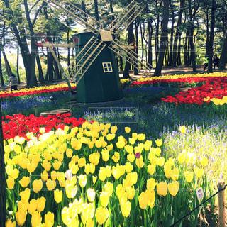 花畑の写真・画像素材[632878]