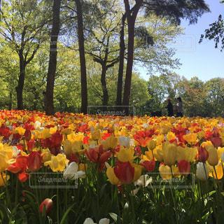 花畑の写真・画像素材[632887]