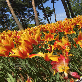 花畑の写真・画像素材[632891]