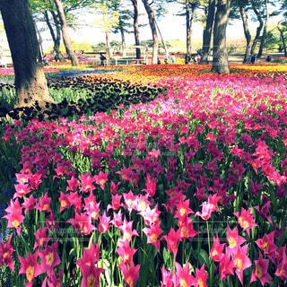 花畑の写真・画像素材[632895]