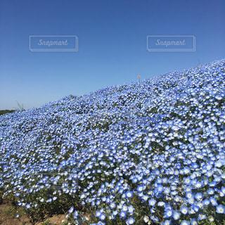 花畑の写真・画像素材[632924]