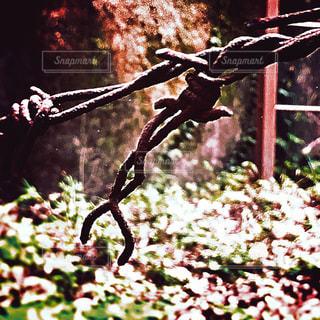 古くなった有刺鉄線の写真・画像素材[755131]