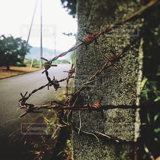 有刺鉄線の写真・画像素材[756828]